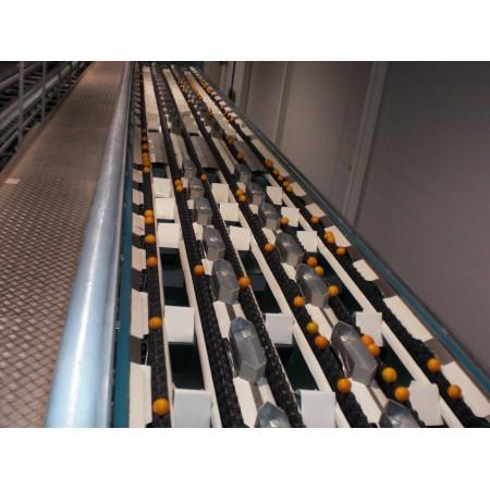 Γραμμές διαλογής & συσκευασίας φρούτων και λαχανικών